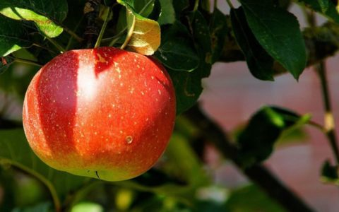 Apfel(ver)führung Radtour auf der Apfelroute